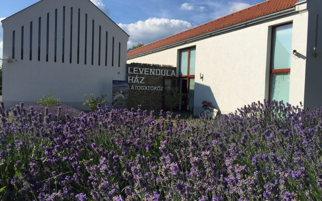 Lavender house – a must see with kids in Tihany